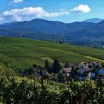 Weinberg am Schwarzwald © Waldili / Pixelio